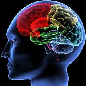 human-brain-AI
